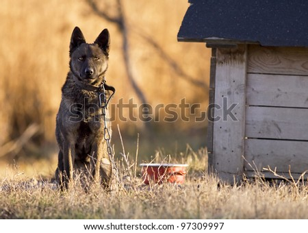 Poor dog near his house - stock photo