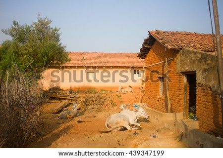 Poor Indian household in province Andhra Pradesh. Zebu cattle with painted horns, Bank chickens, fence from thorny plants and other exotics - stock photo