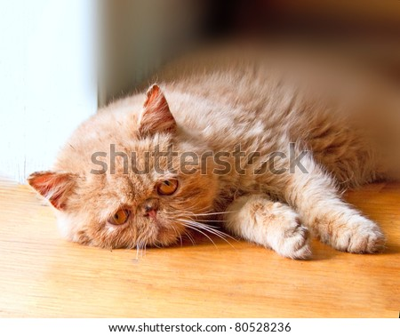 Poor lonely kitten lays on the floor waiting for his friends to come back - stock photo