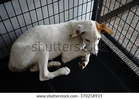 Poor sick dog in the cage waiting for treatment from his vet - stock photo