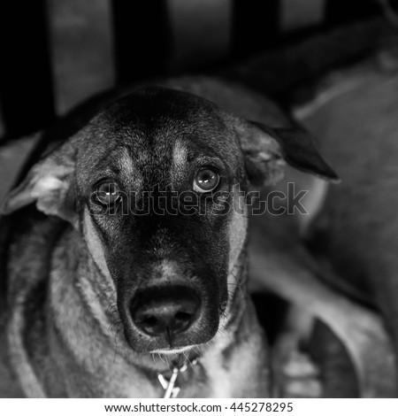 Poor Stray dog are captured - Black and White - Square Shaped Picture - stock photo