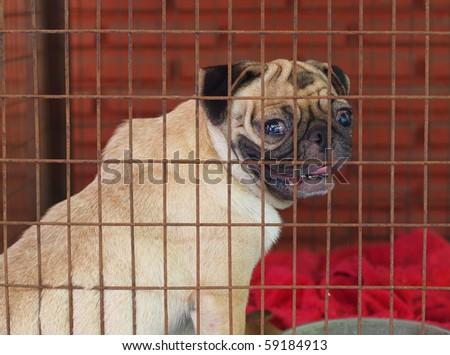 Poorly Dog - stock photo