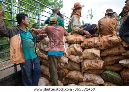 POP PRA, TAK, THAILAND - JANUARY 21, 2016 : Unidentified Myanmar migrant workers is travelling by a truck after load radish at Ruamthaipattana, Pop Pra, Tak, Thailand.