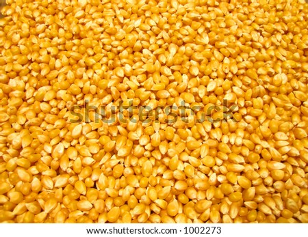 Popcorn Kernels - stock photo