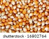 popcorn kernels background - stock photo