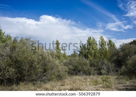Poplar and willow groves next to de River Jarama, in Tamajon Mountains, Guadalajara Province, Spain.