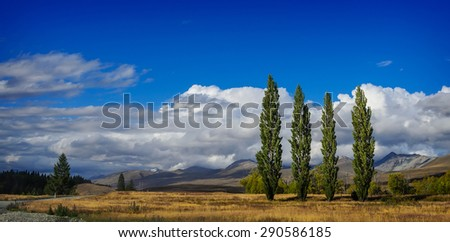 Poplars on a field  near  Lake Tekapo against blue sky with big white clouds. South Island, New Zealand - stock photo