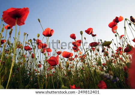 Armistice Day Stock Images Royalty Free Images Amp Vectors