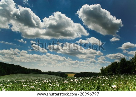 poppies and beautiful heaven - stock photo