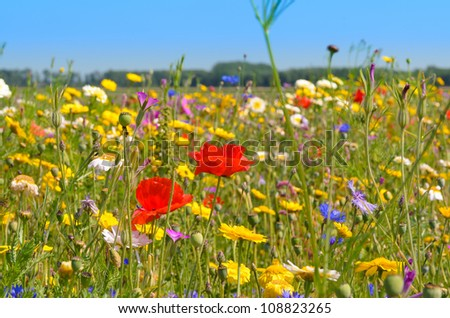 Poppies and Daisies under a hot summer sun - stock photo