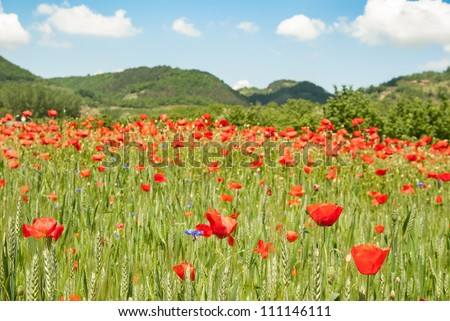 poppies and hills - stock photo