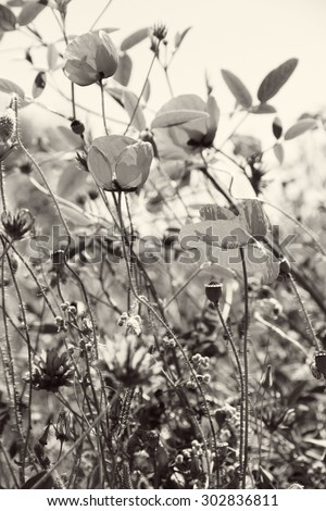 Poppies and other wild flowers on a green field in spring. Turkey.Side. In black and white toned. Retro style   - stock photo