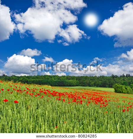 poppies field and cloudy blue sky