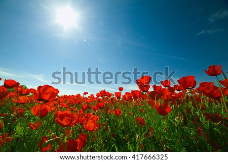 Poppies field with blue sky and sun. Beautiful landscape. - stock photo