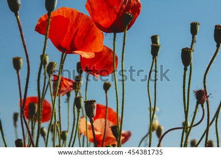 Poppies floral field on sky background