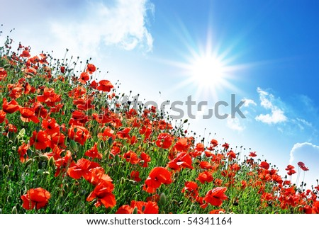 Poppies hill and sunny sky. Composition of spring nature. - stock photo