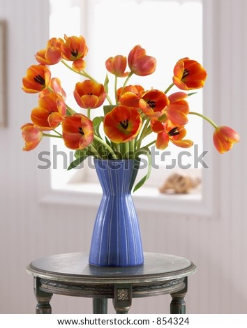 Poppies in Bloom - stock photo