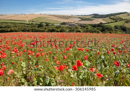 Poppy field in South Downs way, East Sussex, England, selective focus - stock photo