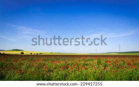 Poppy field landscape with blue sky - stock photo