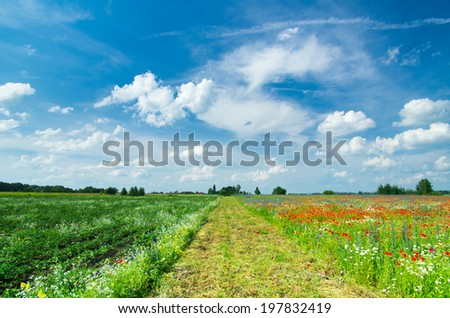 poppy field with bush and blue sky