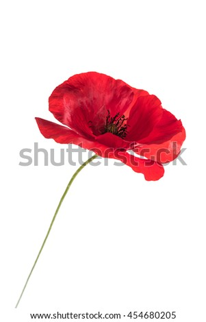 poppy flower - stock photo