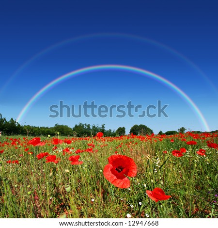Poppy flower field on perfect sunny day with rainbow in the background - stock photo