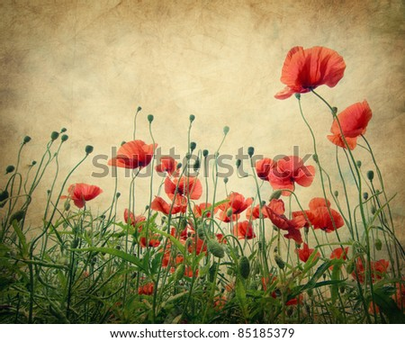 Poppy flower field. Texture and grain added - stock photo