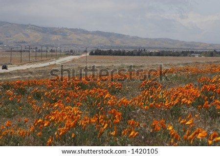 poppy flower field with cloudy sky and the road in the background - stock photo