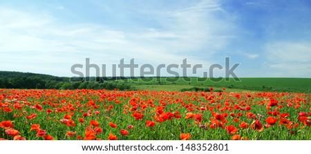 poppy flowers against the blue sky - stock photo