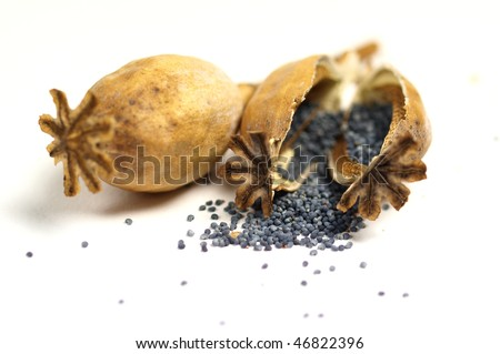Poppy head and seeds on white background - stock photo