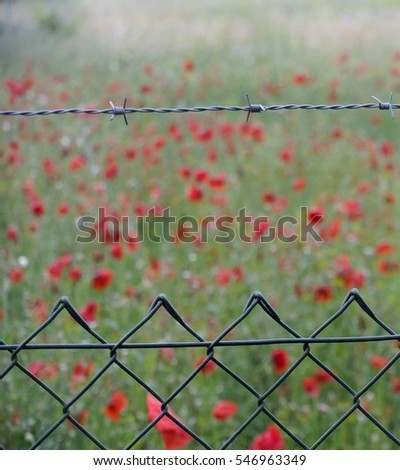 poppy meadow behind a fence