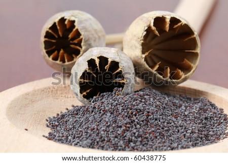 Poppy seeds and empty poppy heads - stock photo