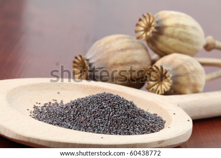 Poppy seeds and poppy heads - stock photo