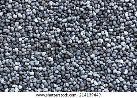 Poppy seeds background - stock photo