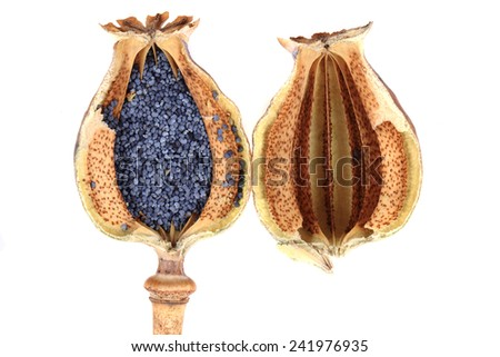 poppy seeds isolated on the white background - stock photo