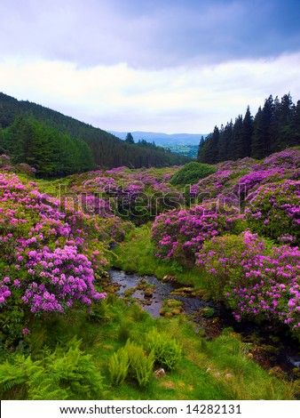 popular beauty spot in the Comeragh Mountains, Co.Waterford, Ireland - stock photo