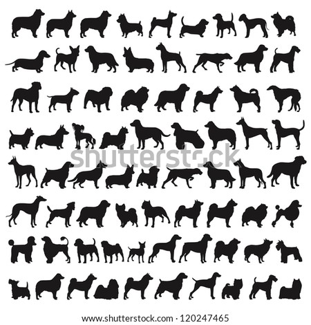 Popular Dog Species in silhouettes - stock photo