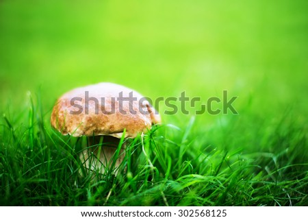 Porcini mushroom in grass on a nice natural creamy background. Shallow depth of field - stock photo