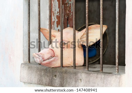 Pork head in a house window where meat is sold - stock photo
