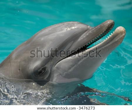 Porpoise - stock photo