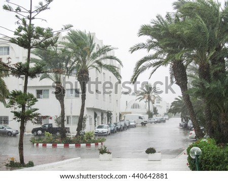 PORT EL KANTAOUI, TUNISIA - SEPTEMBER 13, 2012 : A view of the palm trees during the rain at El Mouradi hotel resort in Port El Kantaoui tourist complex in Tunisia.