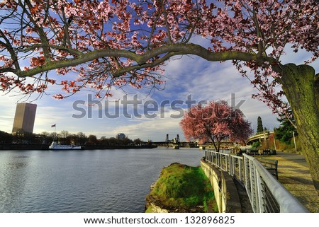 Portland Cherry Blossoms - stock photo