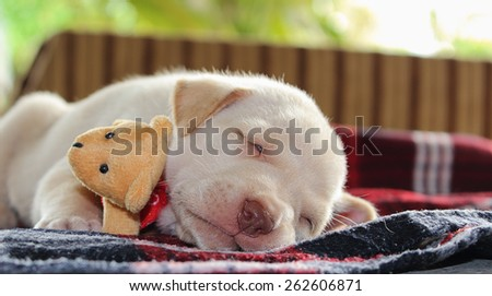 Portrait adorable little puppy, lying with toy teddy bear, soft focus - stock photo