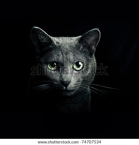 portrait beautiful cat - stock photo