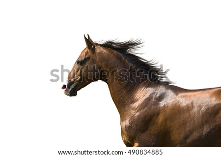 portrait brown horse isolated on the white background