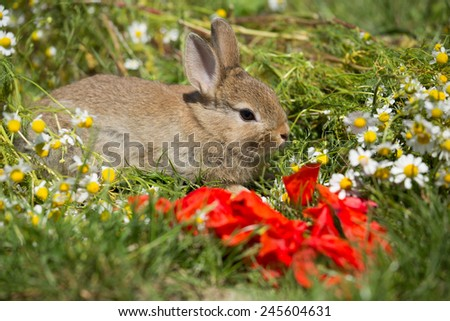 Portrait bunny on blooming meadow - stock photo