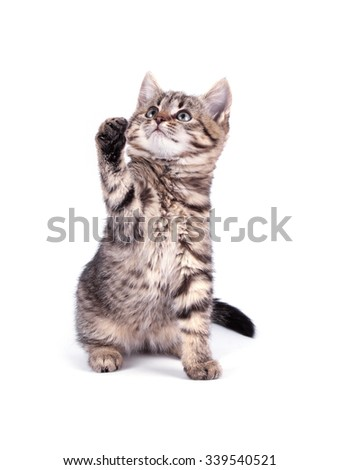 Portrait cat isolated on white background - stock photo