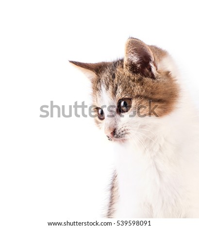 Portrait cat isolated on white background. Pets.