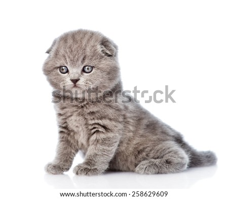 Portrait cute newborn scottish kitten. isolated on white  - stock photo