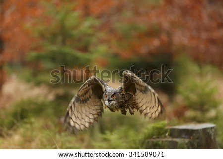 portrait eagle owl  flying - stock photo